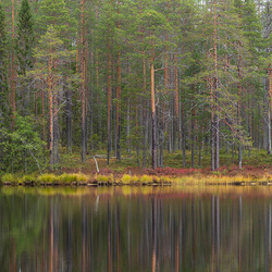 Finse herfst