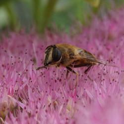 Bij op een bloem