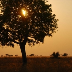 Zonsopgang in de Okavango, Botswana