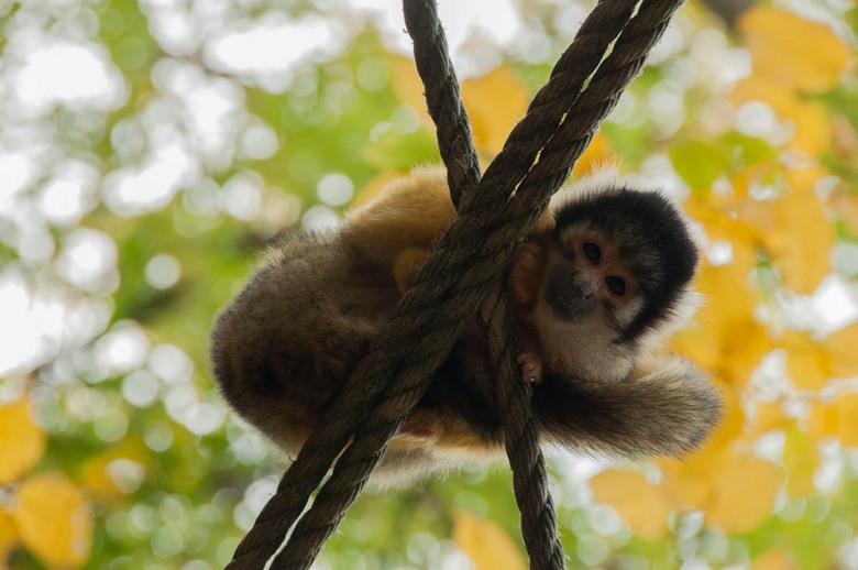 kiekeboe - Dagje in de dierentuin. Het aapje zat zich een hele tijd te verstoppen. Moest er een tijdje op wachten, maar uiteindelijk keer hij toch eve