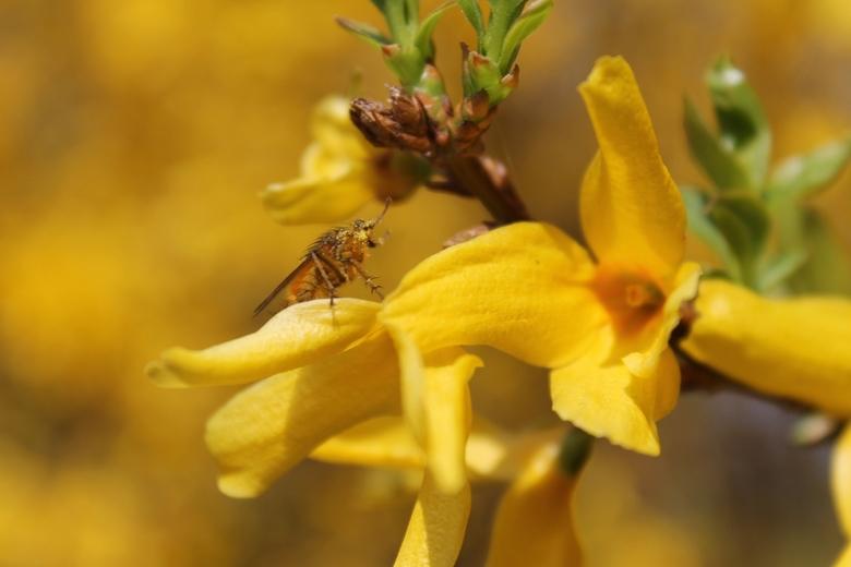 Beestje op een mooie plant  - Trots op deze foto.