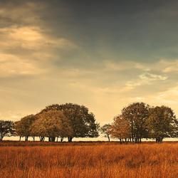 Trees in Field in Autumn