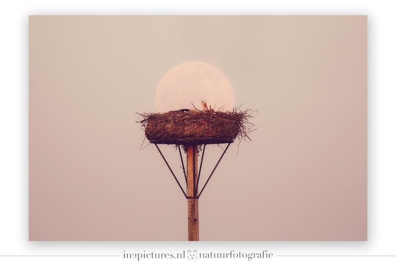De roze super maan... zou het een meisje zijn? - Ik houd van foto's die anders dan anders zijn en met de roze super maan in aantocht dat ik, ik w