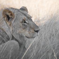Kruger , Zuid Afrika .