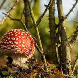 Op een grote paddenstoel...