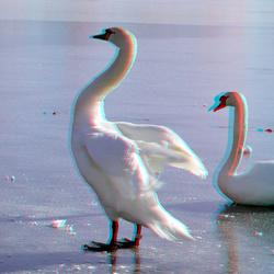 Swans Lageland Rotterdam 3D Pentax 3D-adapter