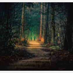 Joggen in het Peerdsbos