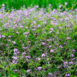veel paarse bloemetjes