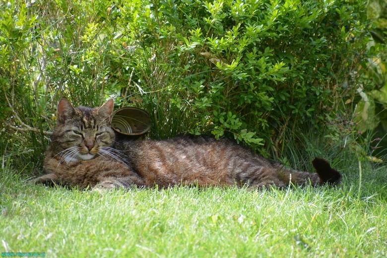Neelix de kat. - Neelix de kater, geboren in maart 2010.