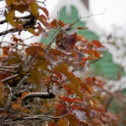 Herfst op de Zaanse Schans