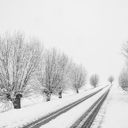 Winterse polderweg