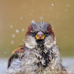 Huismus in bad