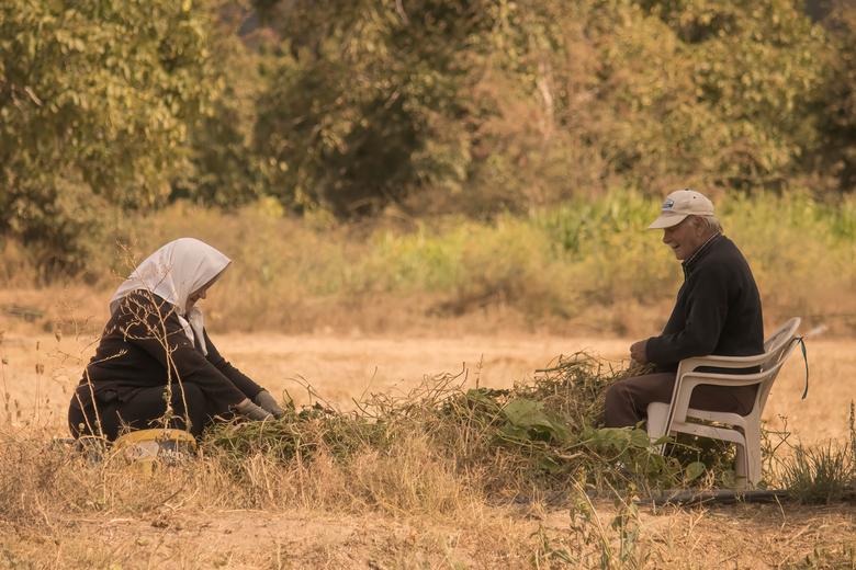 Het oogstseizoen is begonnen op het Kretens platteland - Deze foto is genomen op de Lassithi Hoogvlakte, waar het oogstseizoen in volle gang is. Deze