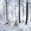 Sneeuwkoorts