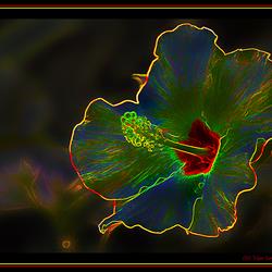 Lighting Flower