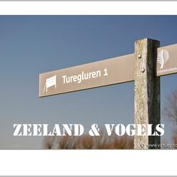ZEELAND & VOGELS