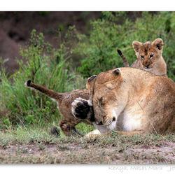 Mama leeuw