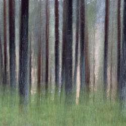 DSCF3016 Dansende Bomen