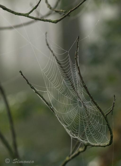 Ragfijn - Herfst in het Purmerbos