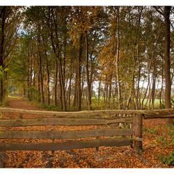 herfstlaantje met hek