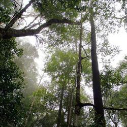 Forrest in Maleisië, Borneo