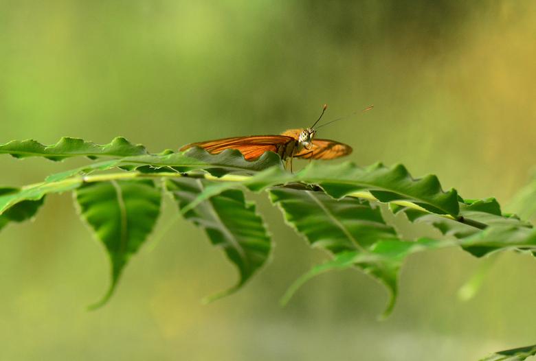 Vlinder in het zachte groen