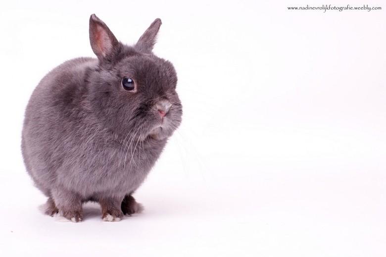 """mijn konijn - een van mijn eerste studio foto <img  src=""""/images/smileys/smile-big.png""""/> mijn konijn .. 1 flitser in gebruik"""