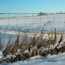 Winter in Empel (NB) 2