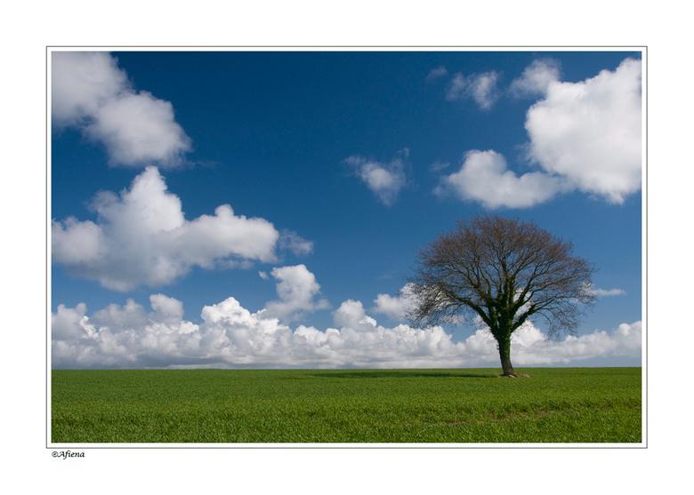 Eenvoud - Dit jaar ben ik in bretagne op zoek gegaan naar vrijstaande bomen. Er zijn er veel, heel veel en toch viel het mij niet mee bomen zo in alle