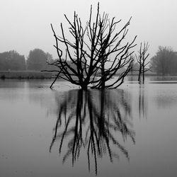 Verdronken boom