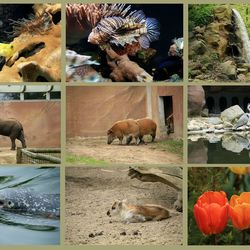 Dagje Ouwehands dierenpark 3