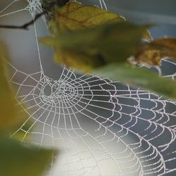 Bevroren web - witte wereld