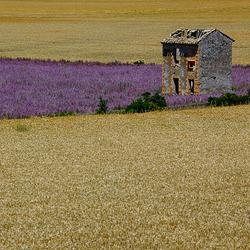 zomer in de Provence