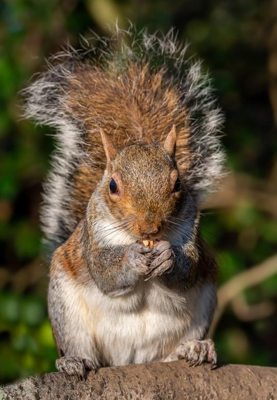 Let me eat my walnut -