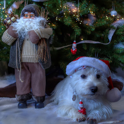prettig kerstfeest