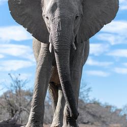 olifant hide groot kleur