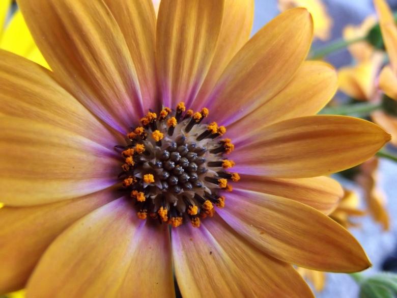 Bloem in de tuin -
