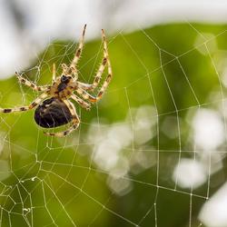 spider @ work
