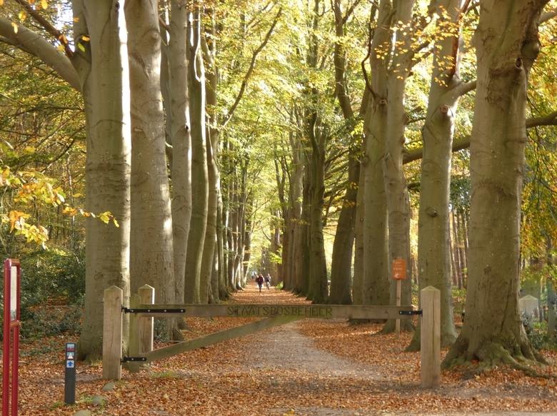 Woudsterberg - Op weg naar woudsterberg