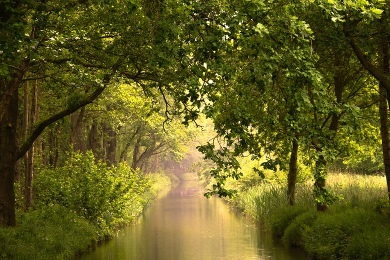 Ochtendzon - Een van mijn hotspots is het Lingebos. Elk moment van het jaar is het daar prachtig. Zowel voor de macro's als voor de landschappen.