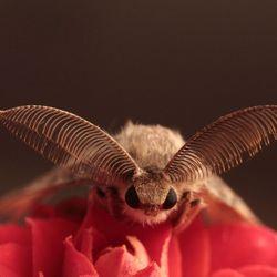 Nacht vlinder