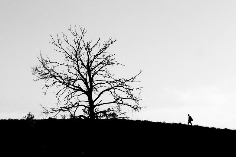 Posbank - Ik probeerde bij de Posbank alleen de boom erop te krijgen. Er liepen alleen maar mensen, dus wachtte ik op het perfecte moment.