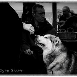 Model hond-.jpg