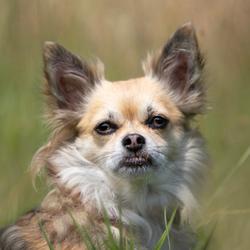 Donna de Chihuahua