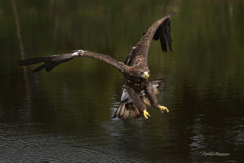 prepare for landing - Even een lekkere moody foto op deze druilerige dag. De regen is zo fijn voor de natuur. Fijne zondag allemaal