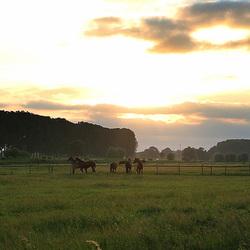 Paarden Panarama