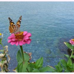 vlinder aan zee