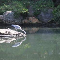 Japan keizerlijke tuinen spiegelbeeld reiger