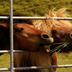 grappige paardjes.