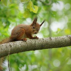 ja ik kan al bomen klimmen